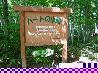 ここからブナの森へ。
