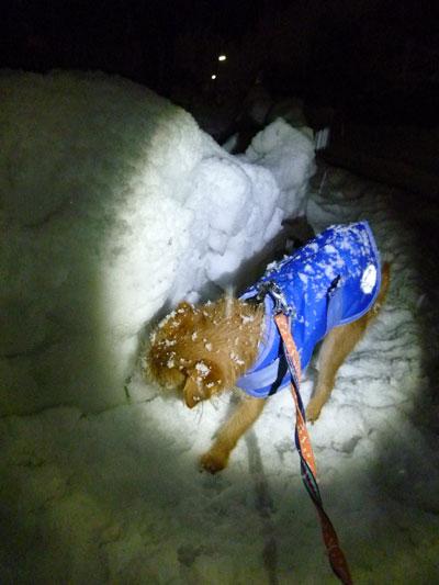 この雪もチェックだ。