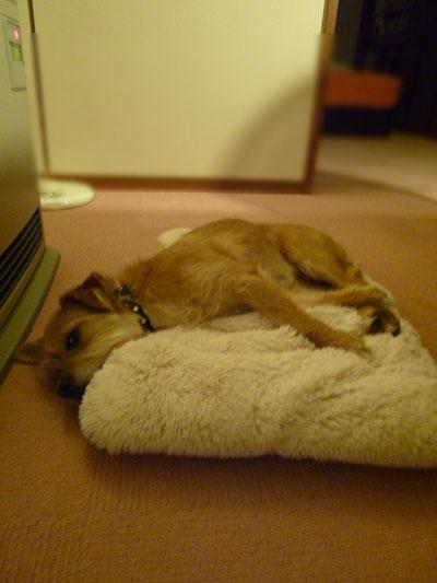 ここで寝てもいいだ。