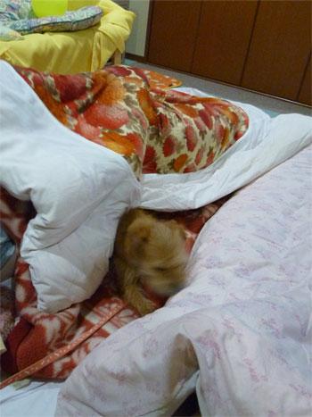 枕なげもするだ。