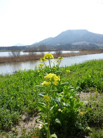 角田山を背景に。