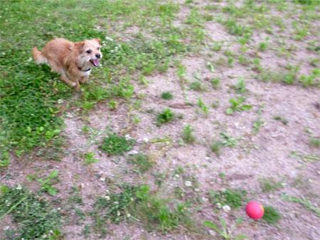 赤いボールもあるだ。
