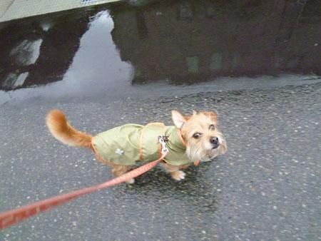 雨でも散歩だ。