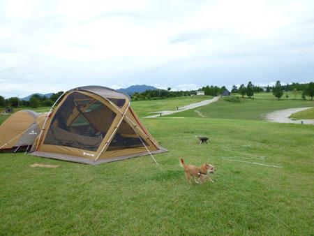 だれかさんのテントだったー。
