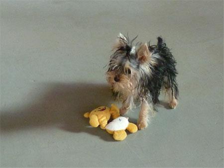 おもちゃ、あるよ。