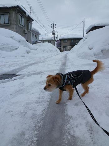 また雪道になっただ。