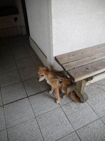 ( おら椅子だ。 )