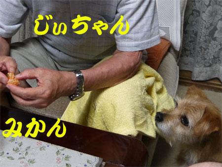 ( おら、みかんも好きだ )