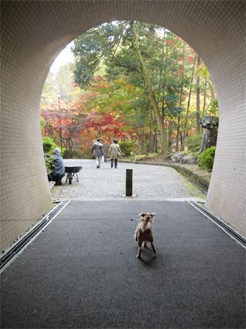 ( トンネルを抜けると )