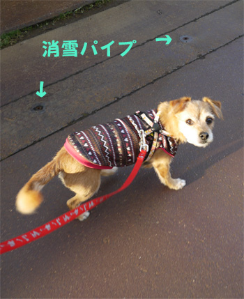 ( おやつだか? )