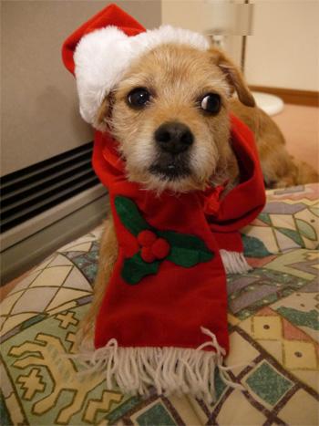 ( クリスマスだ )