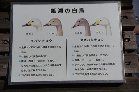 ( どっちだ?)