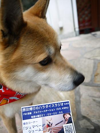 ( ただの犬じゃなかった!)