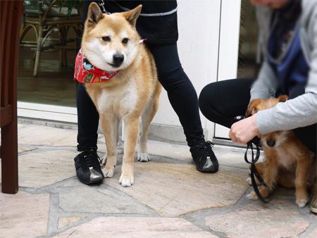 ( 犬なんかいないだ )
