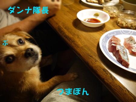 ( お魚だらけだー! )