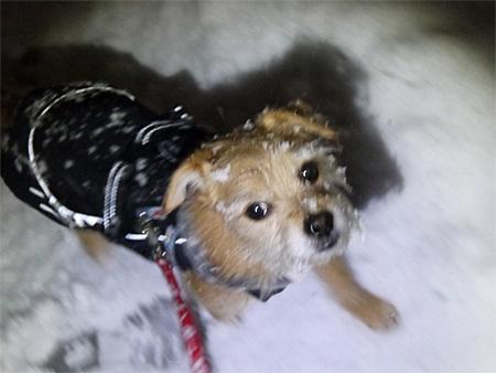 ( 雪でもおやつだ! )