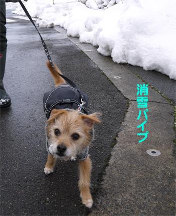 ( さっさと歩くだ )