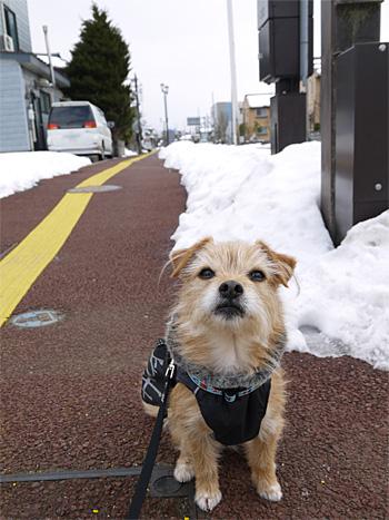 ( 雪 どんなだか? )