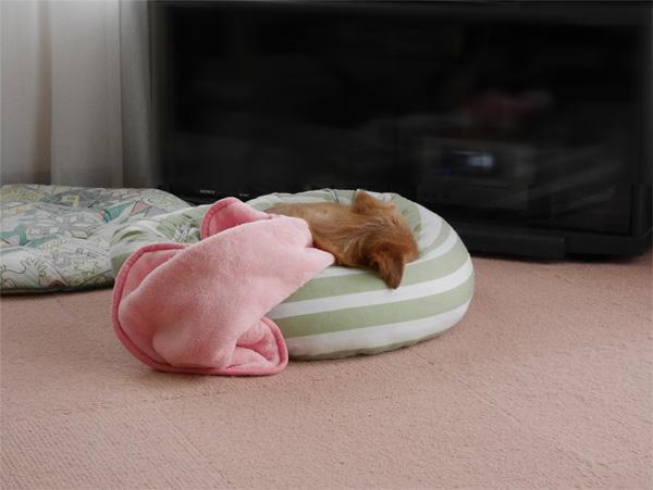( 寝てるだよ )