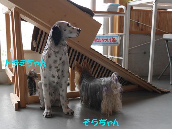 ( 出てきなよ〜 )