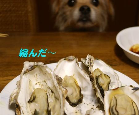( 今夜はなんだ? )