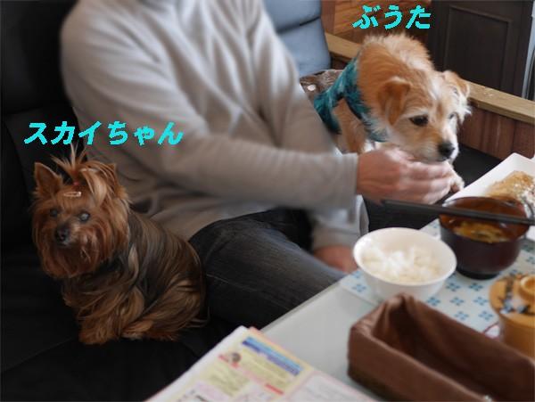 ( いいじゃ〜ないのぉ〜だ )