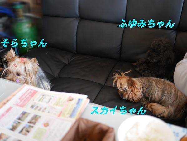 ( 看板娘せいぞろい!)
