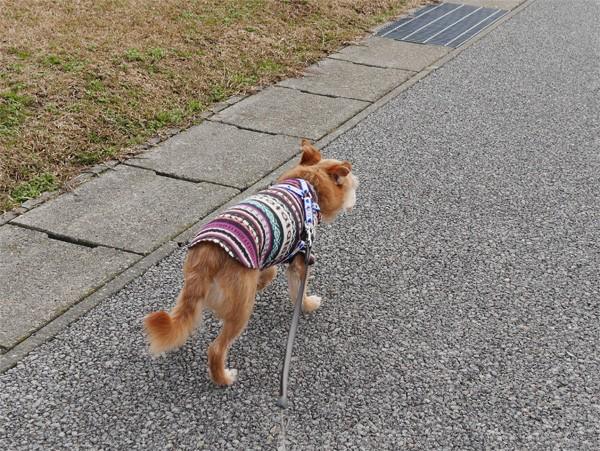 ( また犬が散歩してるだ )