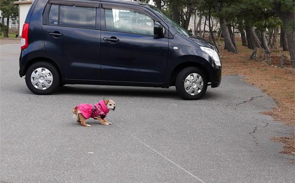 ( 車に乗るだよ )