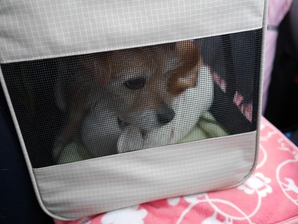 ( 犬が乗ってるだよ )