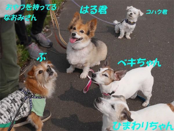 ( いよいよ出るだな )