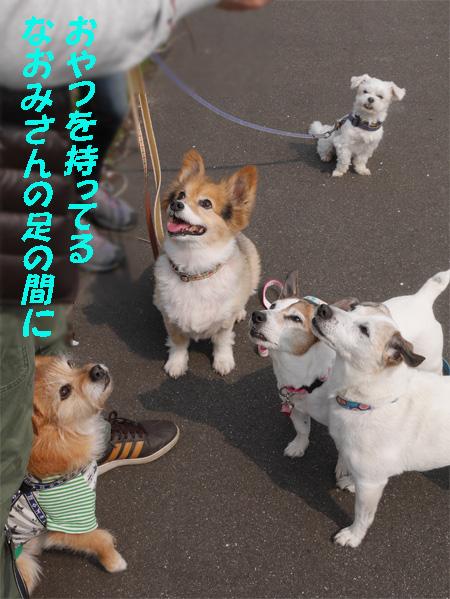( かもーん!)