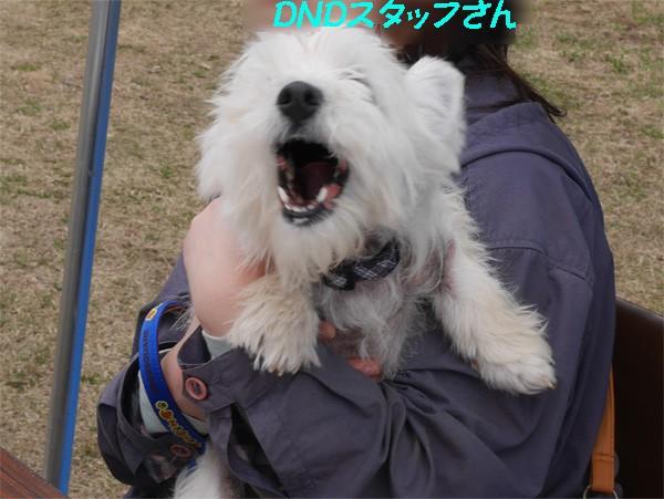 ( 犬が来たーーーー! )