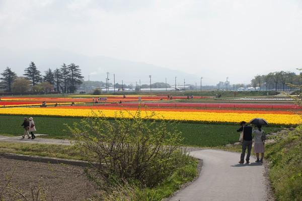 ( 新潟県五泉市の畑 )
