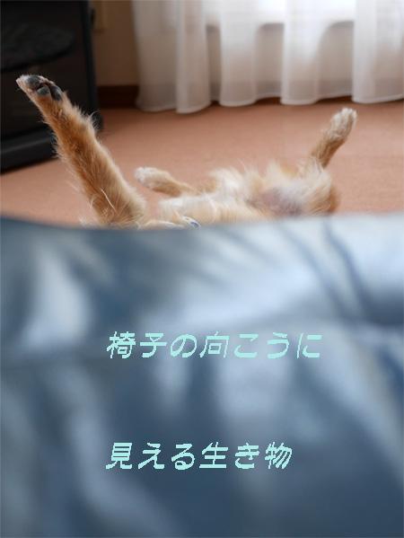( ニョキ )
