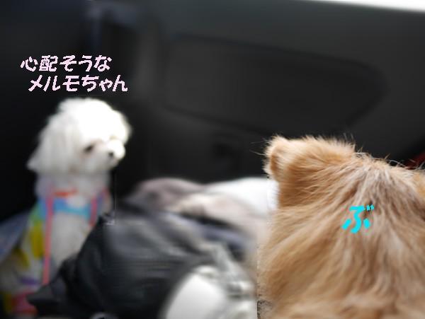 ( 遠慮なくいただくだ )
