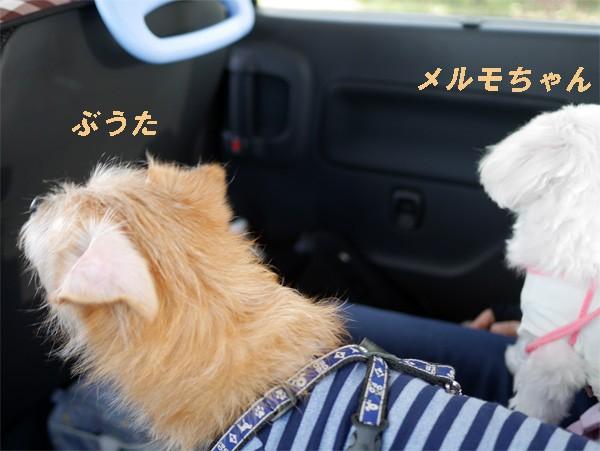 ( 安全運転でお願いするだよ )