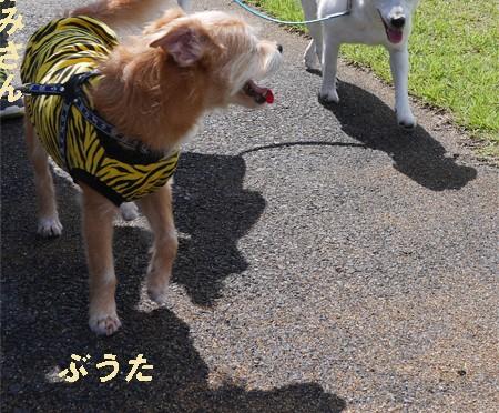 ( ひまちゃんだっ!)