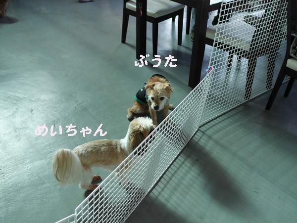 ( 今日は何の日? )