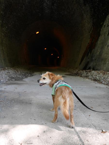 ( トンネルは行きたくないだ )