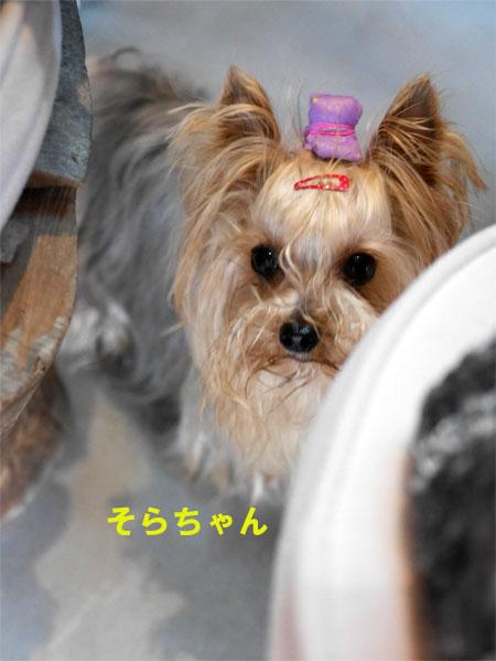 ( 間違ってるわ!)