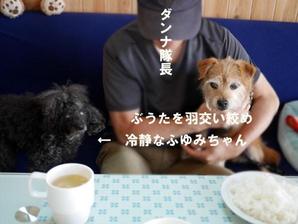 ( ジタバダするだよ )