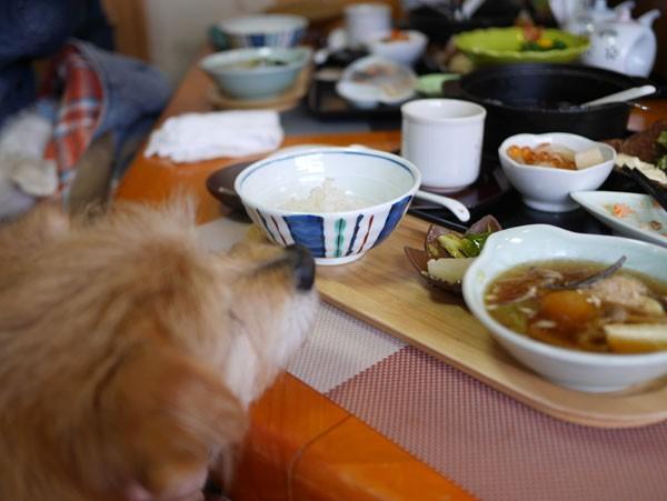 ( 湯豆腐だぁ~ )