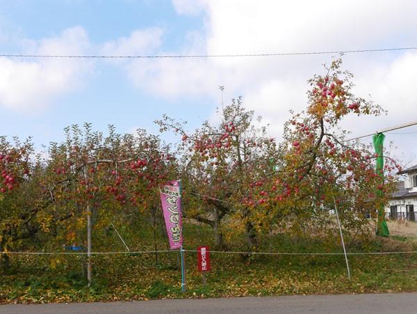 ( りんごの木 )