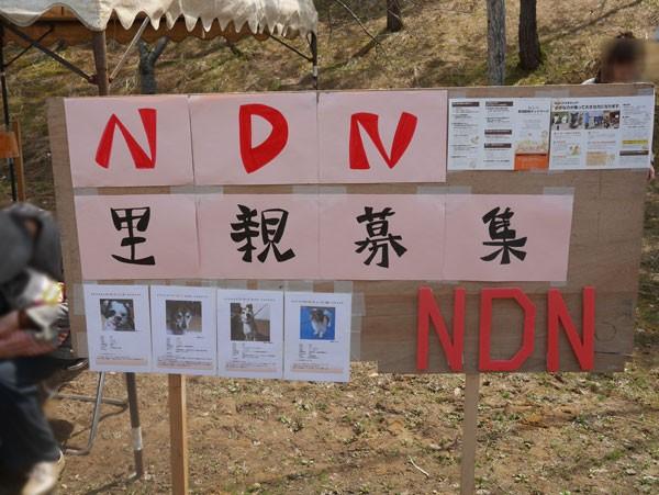 ( NDN 新潟動物ネットワーク譲渡会 )