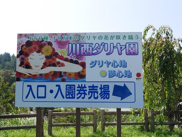 ( やまがた川西ダリア園 )