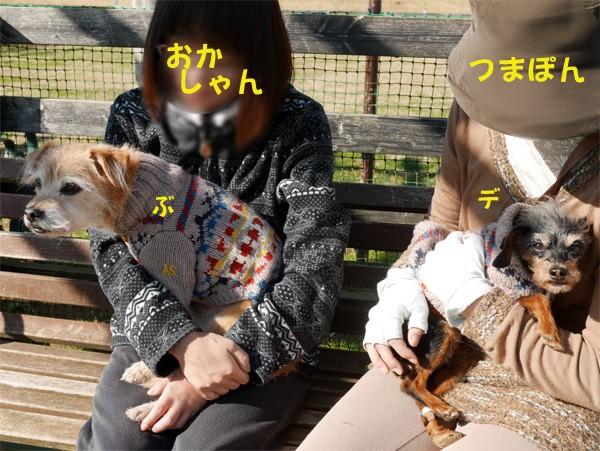 ( 顔、見られないだよ )
