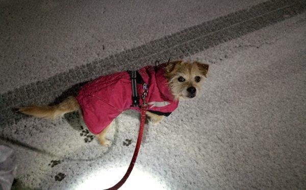 ( また雪なんだよ )