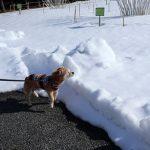 雪ないけどあった