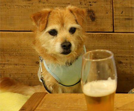 ( ビールよりも、、、 )